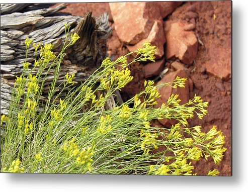 Flower Metal Print featuring the photograph Flower Wood And Rock by Marilyn Hunt