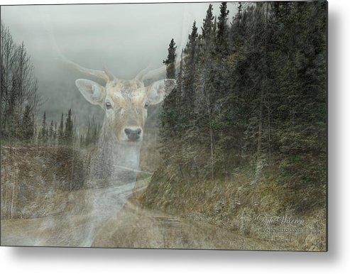 Deer Metal Print featuring the photograph Forest Dweller by Dyle  Warren