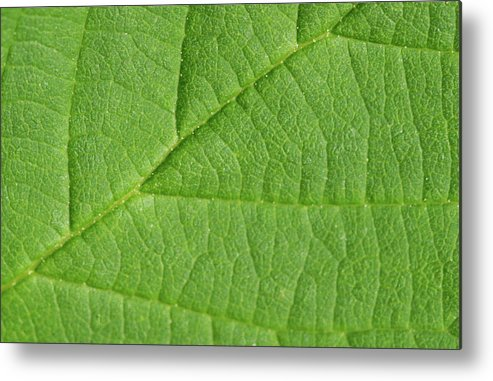 Leaf Metal Print featuring the photograph Green Leaf Texture by Wael Alreweie