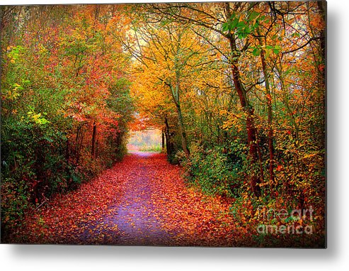 Autumn Metal Print featuring the photograph Hope by Jacky Gerritsen