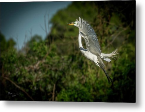 White Metal Print featuring the photograph Leap Of Faith by Marvin Spates