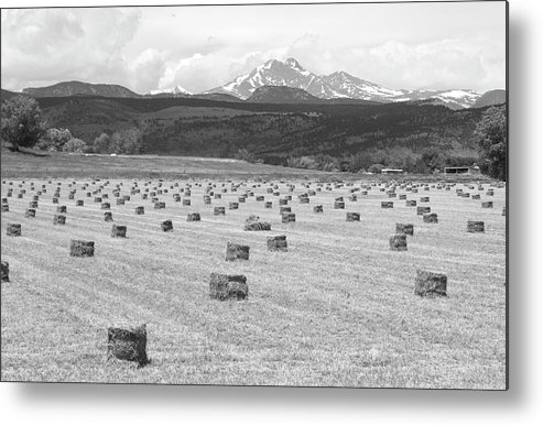 Country Metal Print featuring the photograph Mid June Colorado Hay And The Twin Peaks Longs And Meeker Bw by James BO Insogna