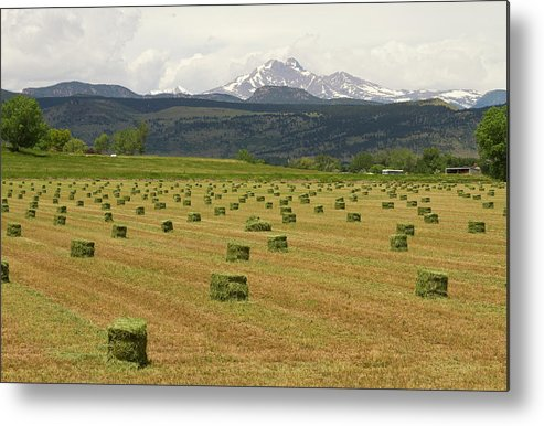 Country Metal Print featuring the photograph Mid June Colorado Hay And The Twin Peaks Longs And Meeker by James BO Insogna