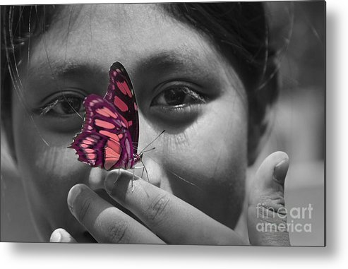 Butterfly Metal Print featuring the photograph Nosey by Katherine Morgan