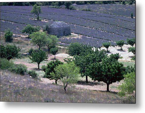 Provence Metal Print featuring the photograph Provence by Flavia Westerwelle
