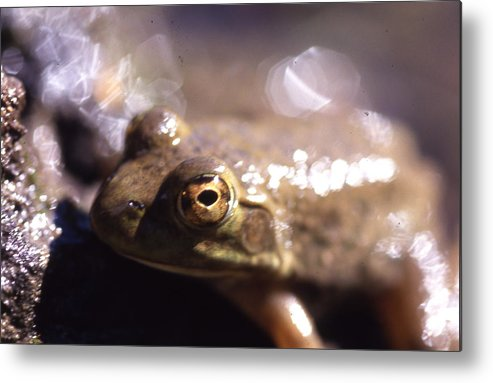 Metal Print featuring the photograph Ribbit by Curtis J Neeley Jr