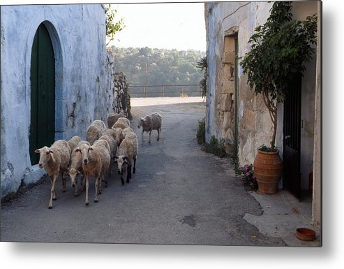 Lehtokukka Metal Print featuring the photograph Sheeps Of Crete by Jouko Lehto
