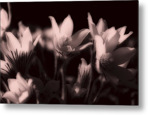 Flowers Metal Print featuring the photograph Sleepy Flowers 2 by Marilyn Hunt