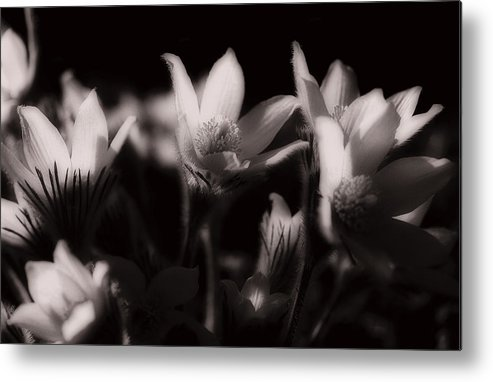 Flowers Metal Print featuring the photograph Sleepy Flowers by Marilyn Hunt
