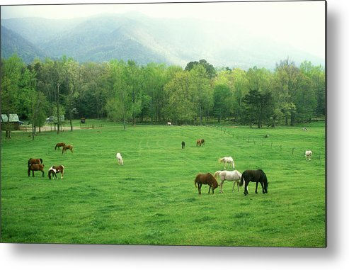 National Park Metal Print featuring the photograph Smokies Horses by John Burk