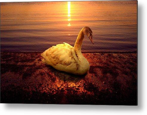 Animal Metal Print featuring the photograph Swan Lake by Yuri Lev