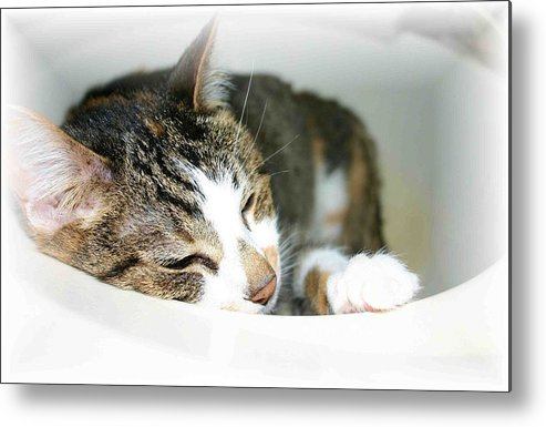 Cat Metal Print featuring the photograph Sweet Dreams by Nelson Strong
