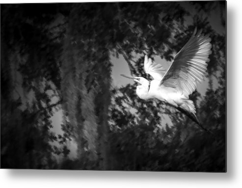Cove Metal Print featuring the photograph Take Flight by Marvin Spates