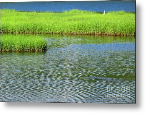 Water Metal Print featuring the photograph Serenity Of Tidal Marsh by Sybil Staples