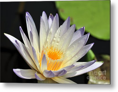 Water Lily Metal Print featuring the photograph water lily 48 Green Smoke by Terri Winkler
