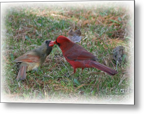 Wild Birds Metal Print featuring the photograph Kissing Cardinals by Victoria Dauphinee