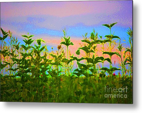 First Star Art Metal Print featuring the photograph Meadow Magic by First Star Art