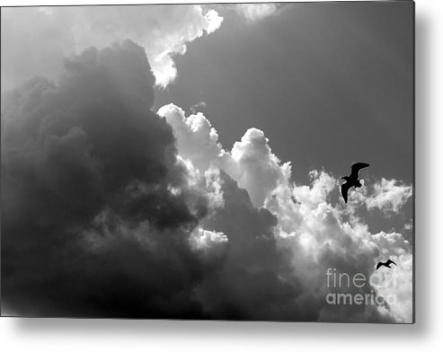 Seascape Metal Print featuring the photograph Seagulls In Flight Mb058bw by Earl Johnson