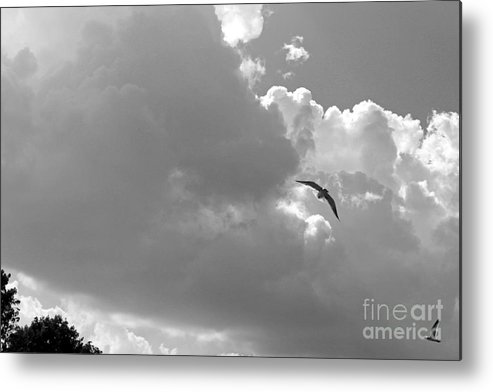 Seascapes Metal Print featuring the photograph Seagulls Mb043bw by Earl Johnson