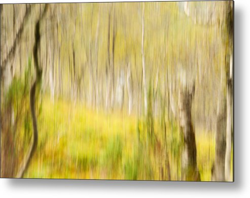 Abstract Metal Print featuring the photograph Abstract Forest Scenery by Gry Thunes