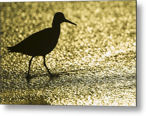 Nature Metal Print featuring the photograph Bird Silhouette by John Shaw