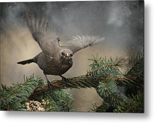 Lora Metal Print featuring the mixed media Blackbird by Heike Hultsch