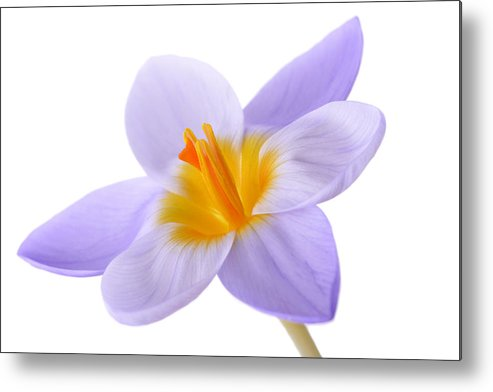 Beautiful Metal Print featuring the photograph Crocus by Mark Johnson