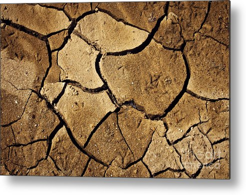 Agriculture Metal Print featuring the photograph Dry Land by Carlos Caetano