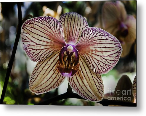 Art Metal Print featuring the photograph Orchid by John Cocchi