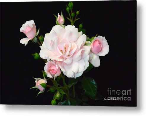 Pretty In Pink Metal Print featuring the photograph Pretty In Pink by Jeannie Rhode