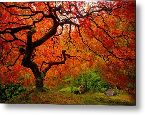 Autumn Metal Print featuring the photograph Tree Fire by Darren White