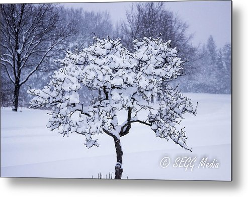 Segg Media Metal Print featuring the photograph Tree Frosting by Stephen Gray
