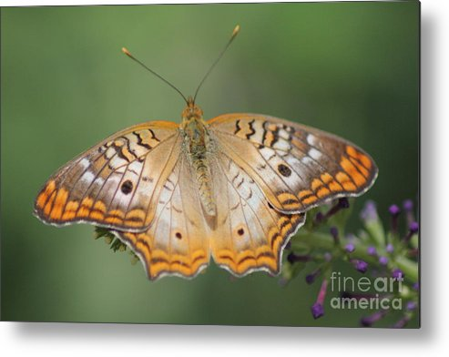 Butterfly Metal Print featuring the photograph Butterfly 10 by Diane Greco-Lesser