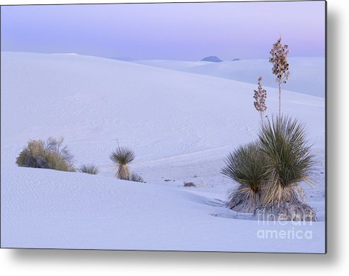 White Sands National Monument Metal Print featuring the photograph White Sands by John Shaw