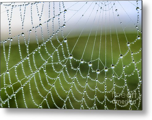 Spiderweb Metal Print featuring the photograph Dew On Spiderweb by Thomas R Fletcher