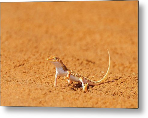Adventure Metal Print featuring the photograph African Reptiles by Shannon Benson