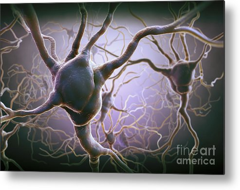 Anatomical Model Metal Print featuring the photograph Neuron by Science Picture Co