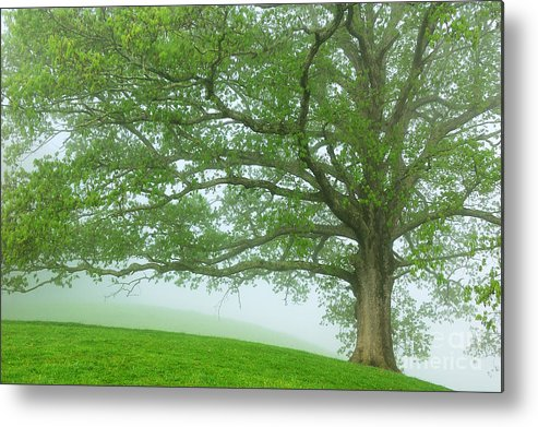 West Virginia Metal Print featuring the photograph White Oak Tree In Fog by Thomas R Fletcher