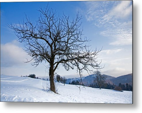 Trees Metal Print featuring the photograph Winter Landscapes by Ian Middleton