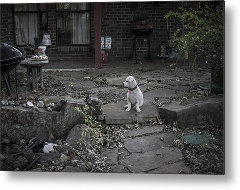 Dog Metal Print featuring the photograph Callie by Arnie Arnold