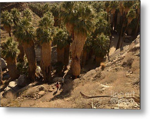 Indian Canyons Metal Print featuring the photograph Indian Canyon by Yinguo Huang