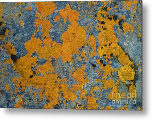 Arctic Metal Print featuring the photograph Lichened Rocks by John Shaw