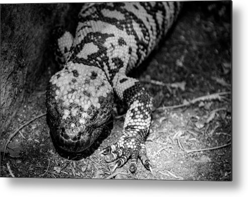 Reptiles Metal Print featuring the photograph Hiss by Marit Runyon