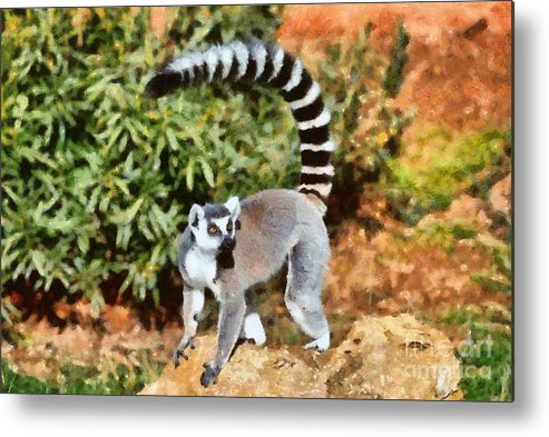 Ring Tailed Lemur Metal Print featuring the painting Ring Tailed Lemur by George Atsametakis