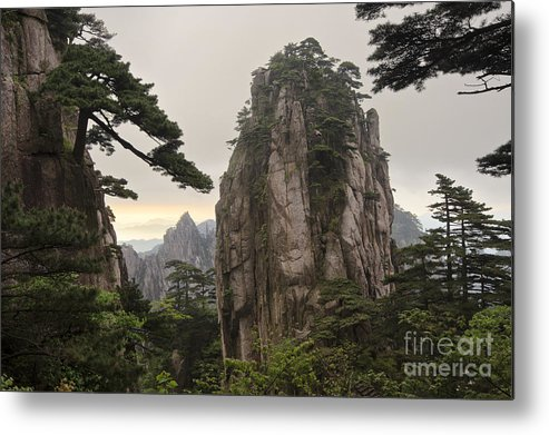 Asia Metal Print featuring the photograph Chinese White Pine On Mt. Huangshan by John Shaw