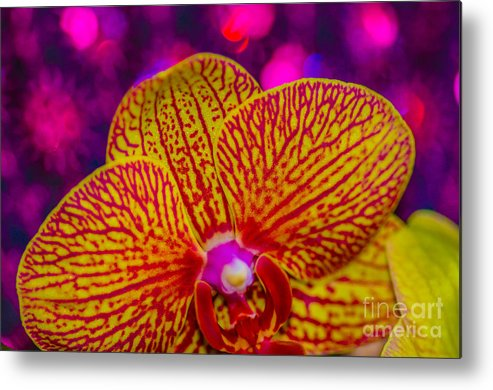 Metal Print featuring the photograph Orchid by Gerald Kloss