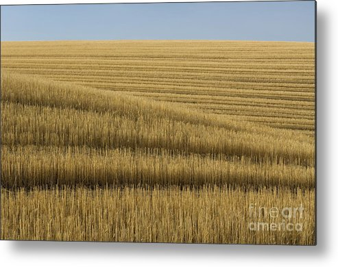 Farm Metal Print featuring the photograph Tracks In Field by John Shaw