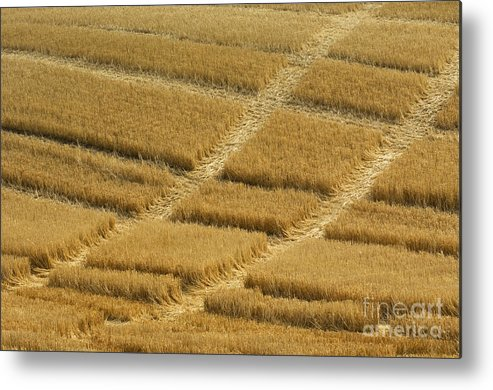 Tracks Metal Print featuring the photograph Tracks In Field by John Shaw
