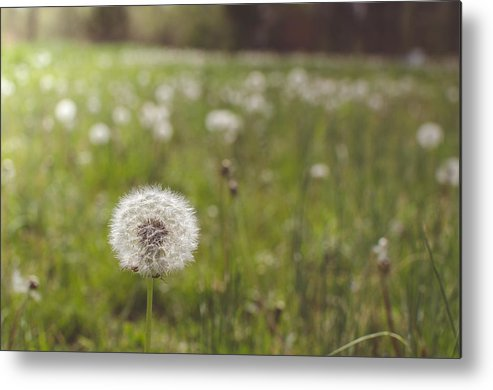 Dandelion Metal Print featuring the photograph A Dandy Field by Debbie King