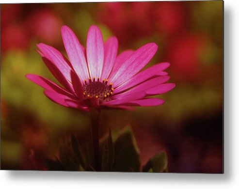 Flowers Metal Print featuring the photograph A Flower In A Shadow by Jeff Swan